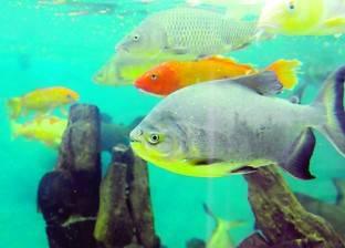 معهد «علوم البحار».. هنا تحمى مصر شواطئها وأسماكها