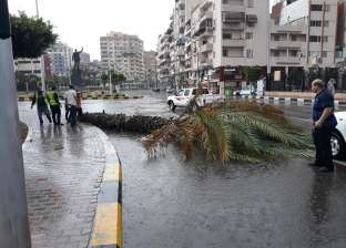 الطقس السيئ يتسبب في سقوط نخلة ببورسعيد دون إصابات