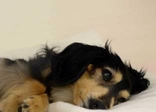 حكم قضائى بإجازة مدفوعة الأجر لرعاية كلب.. تعرف عليه