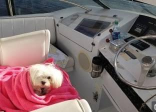 """آبي.. كلبة بـ""""عين واحدة"""" تبنتها عائلة ثرية: تجوب العالم على متن باخرة"""
