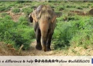 سكان قرية هندية يحيكون ثيابا خاصة لإنقاذ الفيلة من البرد