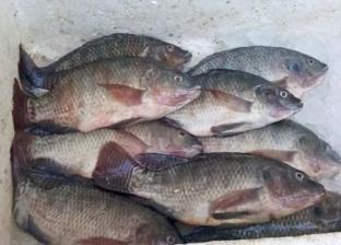 هبوط أسعار الأسماك.. والبلطي بـ24 جنيها
