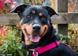 محكمة بريطانية تمنع شابا من اقتناء الحيوانات 5 سنوات: كان يوبخ كلبه