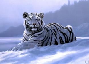 قتل نمر مهدد بالانقراض بسبب هربه من قفصه