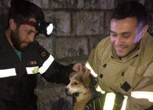 بالصور| إنقاذ كلب علق في مياه مجاري بقرية لبنانية
