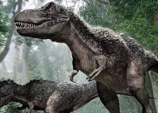 بالصور| اكتشاف أكبر قدم لديناصور على وجه الأرض