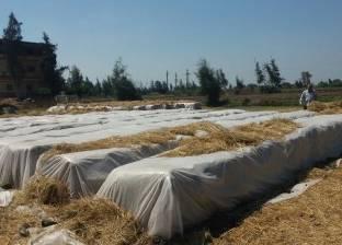 """""""شؤون البيئة بوسط الدلتا"""": اعتماد 47 ألف طن أعلاف وسماد من قش الأرز"""