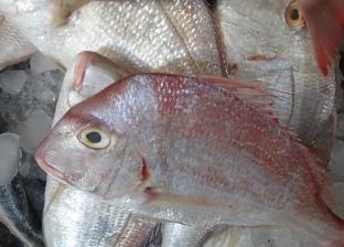 استقرار أسعار الأسماك.. والبلطي بـ23.5 جنيه