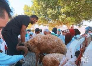 جامعة مطروح تنظم قافلة بيطرية مجانية لمدينة سيدي براني