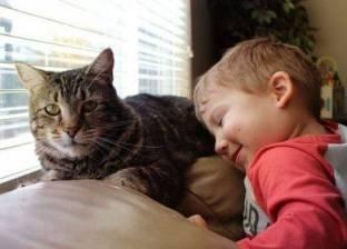 بالفيديو| في يومها العالمي.. قطط ساهمت في إنقاذ البشرية