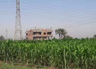 """""""زراعة المنوفية"""": تحرير 3254 محضر تقسيم الأراضي الزراعية والبناء عليها"""