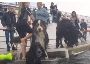 بالفيديو  من أجل وقت ممتع.. يقضون يوما مع كلابهم في حمام السباحة