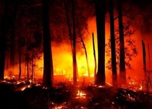 دمار وصلاة استسقاء وحيوانات تتألم.. مشاهد من جحيم الغابات في أستراليا