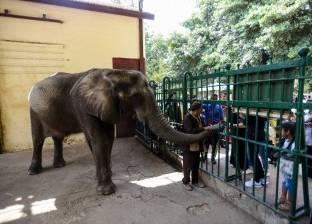 اليوم الثانى للعيد: 40 ألفاً زاروا حديقة الحيوان.. ومتنزهات القاهرة «شبه خالية»