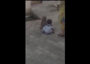 بالفيديو| في الهند.. قرد يحتجز طفلا بالإكراه