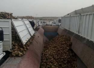 زراعة 122 ألف فدان بنجر في كفر الشيخ