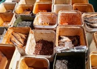 مصادرة رنجة وأسماك ودواجن فاسدة قبل طرحها بالأسواق في المنيا