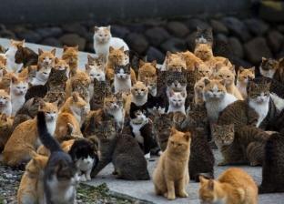 20 قطة تأكل جثة «عجوز» في «الساحل».. يومان من «الرعب» داخل «شقة المسن»