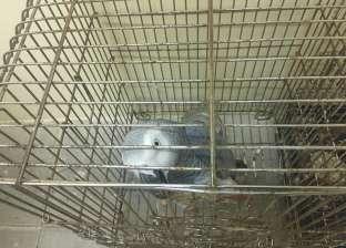 صور  نسناس وببغاوان مهددان بالانقراض في محل لبيع الحيوانات بالإسكندرية