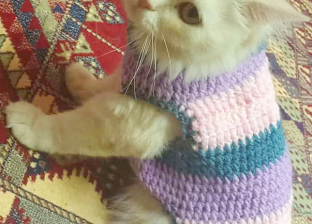 """سمية """"مصممة أزياء للحيوانات الأليفة"""": """"بصمم فساتين للقطط والكلاب"""""""
