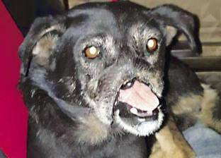 «أنوبيس».. كلب هزّ القلوب من «جسر السويس» إلى أمريكا