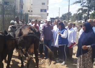 """تحصين 208 ألف رأس ماشية ضد """"الحمى القلاعية"""" بكفر الشيخ"""