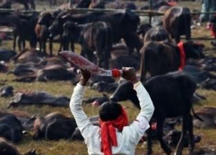 تقرير لتقليل ذبح الماشية ببريطانيا لمكافحة تغيير المناخ