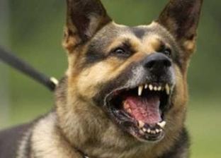 كلب مسعور يعقر 4 أطفال وشاب في قرية الصوامعة بسوهاج