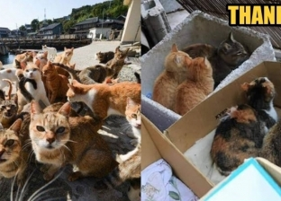 """إجلاء آلاف القطط من جزيرة يابانية خوفا من الإعصار """"هاجيبيس"""""""
