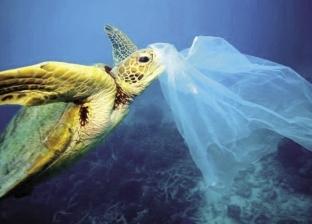 حملات شعبية تعلن الحرب على أكياس البلاستيك: أنقذوا القاهرة