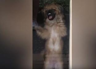 بالفيديو| «كلبة وفية» تتوسل إلى صديقتها لعدم مغادرتها