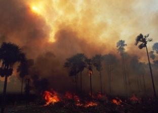 آخرها حريق الأمازون.. النيران تلتهم غابات العالم في شهر