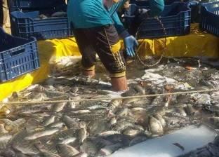 الإحصاء: 10.7% زيادة إنتاج الأسماك من منخفض الريان
