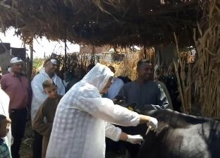 """""""بيطري بني سويف"""": تحصين 400 ألف رأس ماشية وأغنام ضد الحمى القلاعية"""