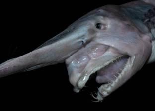 العثور على مخلوق بحري غامض نافق على شواطئ استراليا