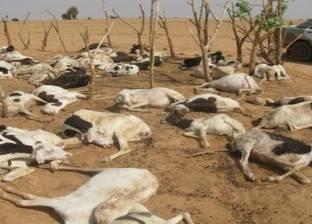 الحر يضرب سوق الماشية بالمنيا..مزارعون: أصيبت بالإعياء وأسعارها تراجعت