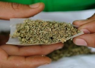 """دراسة: """"الماريجوانا"""" تؤثر على الحيوانات المنوية للرجال"""