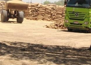 توزيع أكثر من ألف طن تقاوي القمح والفول على مزارعي كفرالشيخ