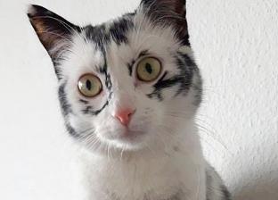 لديها 6 آلاف متابع بـ«إنستجرام».. قطة سوداء تتحول إلى «سنووايت»