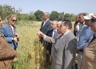 بالصور| تجربة زراعة القمح المقاوم للملوحة بجامعة قناة السويس