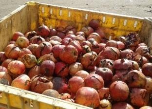 ضبط 27 طنًا فواكه وخضروات فاسدة بثلاجة حفظ مواد غذائية بالعاشر