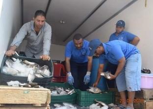 محافظة البحر الأحمر تطرح 4 أطنان سمك بلطي بأسعار مخفضة للمواطنين