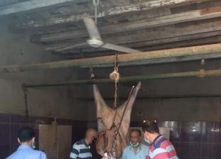 ضبط جزار يذبح خارج السلخانة وبحوزته أختام مزورة بالمنوفية