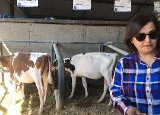 """""""الزراعة"""": """"التأمين البيطري"""" يوفر تعويضات مناسبة في حالة نفوق الماشية"""