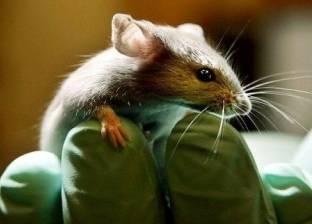 بالفيديو| قطيع من الفئران يثير المخاوف في باريس
