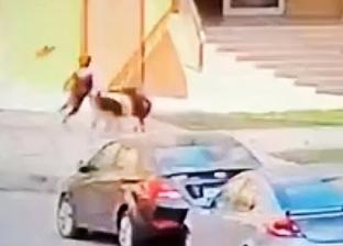 بعد واقعة «طفل مدينتي».. مصادرة 6 كلاب من سلالات نادرة