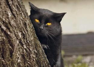 بالفيديو| لمحبي وهواة تربية القطط.. 5 شائعات ارتبطت بها