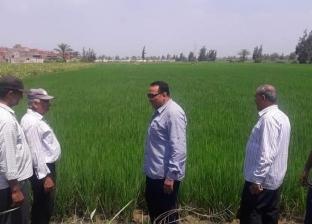 وكيل زراعة دمياط يتابع مشروع ترشيد استهلاك المياه في الزراعة