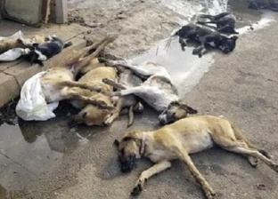 غضب لإعدام الكلاب الضالة فى الأقصر: «هتدمروا السياحة»