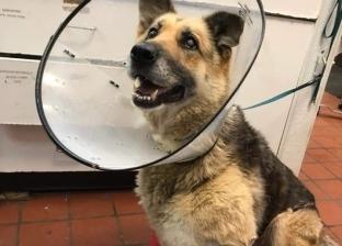 """""""قسوة البشر"""".. كلب يلتهم ساقه بعد أن تركه مربيه بدون طعام أو شراب"""